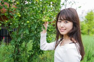 果物狩り・収穫の写真素材 [FYI04707339]