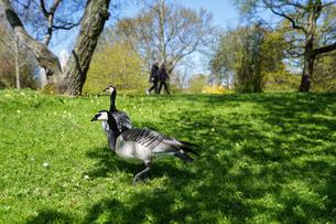 公園にいる野鳥の写真素材 [FYI04709981]