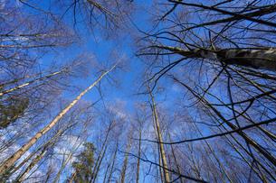 森林の写真素材 [FYI04710002]