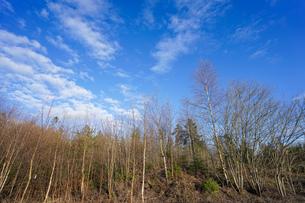 森林の写真素材 [FYI04710007]