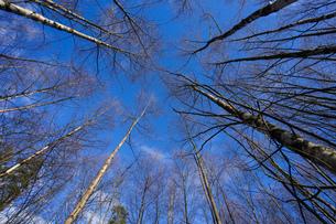 森林の写真素材 [FYI04710010]