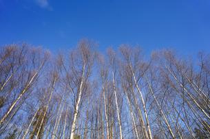 森林の写真素材 [FYI04710013]