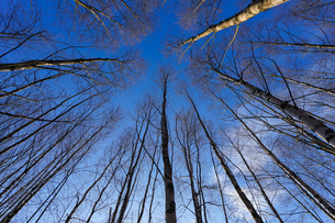 森林の写真素材 [FYI04710014]