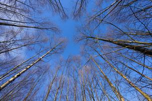 森林の写真素材 [FYI04710015]