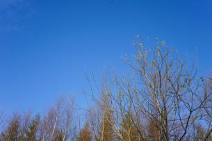 森林の写真素材 [FYI04710018]