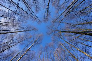 森林の写真素材 [FYI04710019]