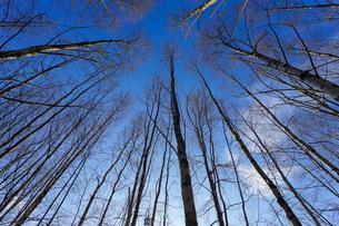 森林の写真素材 [FYI04710020]
