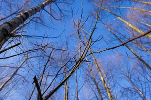 森林の写真素材 [FYI04710022]
