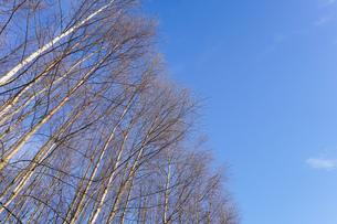 森林の写真素材 [FYI04710024]