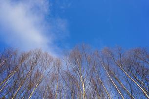 森林の写真素材 [FYI04710030]