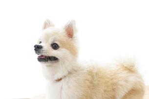 かわいい犬の写真素材 [FYI04711271]