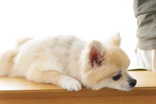 かわいい犬の写真素材 [FYI04711279]