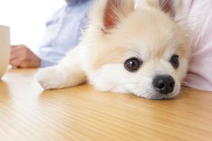 かわいい犬の写真素材 [FYI04711302]