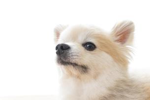 かわいい犬の写真素材 [FYI04711306]