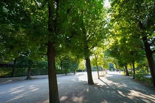 オーストリア・ウィーンの写真素材 [FYI04711986]