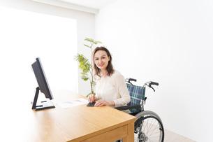 車椅子でデスクワークをする外国人の女性の写真素材 [FYI04712362]