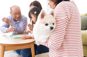 幸せな家族の集合写真の写真素材 [FYI04712914]