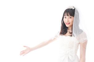 紹介をするドレス姿の花嫁の写真素材 [FYI04714779]