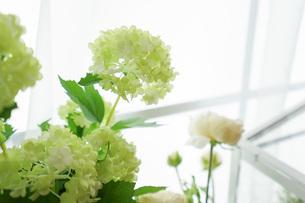 室内観葉植物イメージの写真素材 [FYI04721546]
