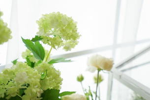 室内観葉植物イメージの写真素材 [FYI04721552]