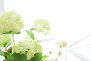 室内観葉植物イメージの写真素材 [FYI04721555]