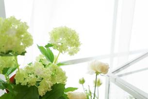 室内観葉植物イメージの写真素材 [FYI04721556]