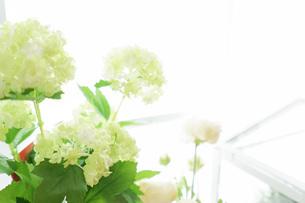 室内観葉植物イメージの写真素材 [FYI04721558]