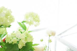 室内観葉植物イメージの写真素材 [FYI04721559]