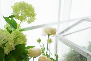 室内観葉植物イメージの写真素材 [FYI04721561]