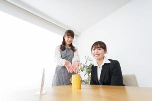 カフェで働く女性の写真素材 [FYI04723074]