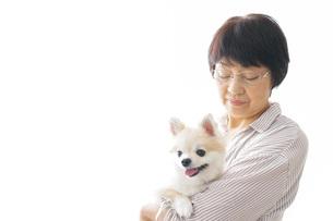 犬を買うシニア女性の写真素材 [FYI04723671]