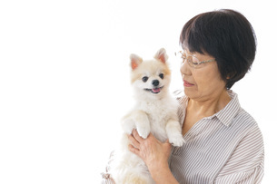 犬を買うシニア女性の写真素材 [FYI04723673]