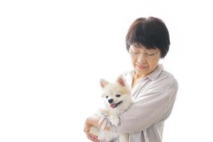 犬を買うシニア女性の写真素材 [FYI04723682]