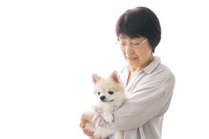 犬を買うシニア女性の写真素材 [FYI04723685]