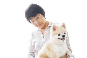 犬を買うシニア女性の写真素材 [FYI04723690]