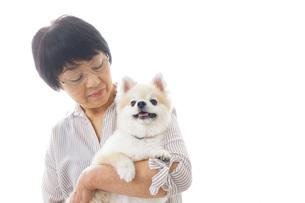 犬を買うシニア女性の写真素材 [FYI04723692]