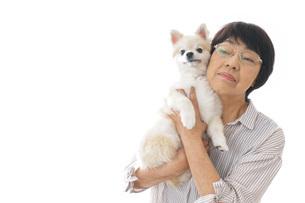 犬を買うシニア女性の写真素材 [FYI04723694]