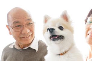 ペットを飼う高齢者夫婦の写真素材 [FYI04723696]