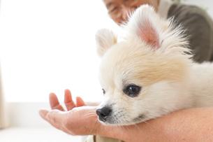 犬を飼うシニア夫婦の写真素材 [FYI04723793]