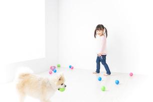 犬と一緒に遊ぶ子どもの写真素材 [FYI04723844]