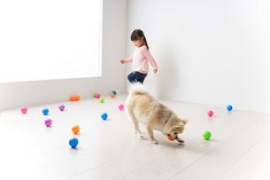 犬と一緒に遊ぶ子どもの写真素材 [FYI04723854]