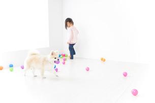 犬と一緒に遊ぶ子どもの写真素材 [FYI04723863]