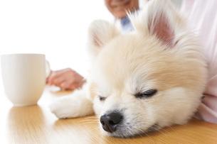 犬を飼うシニア夫婦の写真素材 [FYI04724112]