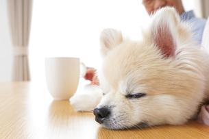 犬を飼うシニア夫婦の写真素材 [FYI04724115]