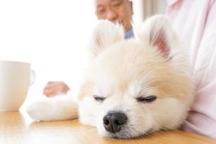 犬を飼うシニア夫婦の写真素材 [FYI04724119]