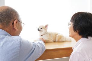 ペットショップで犬を見るシニア夫婦の写真素材 [FYI04724191]