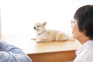 ペットショップで犬を見るシニア夫婦の写真素材 [FYI04724195]