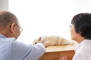 ペットショップで犬を見るシニア夫婦の写真素材 [FYI04724212]