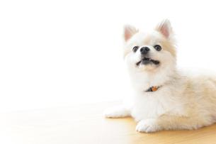 リラックスする犬の写真素材 [FYI04724412]