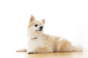 リラックスする犬の写真素材 [FYI04724419]